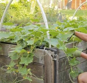 вода в огороде