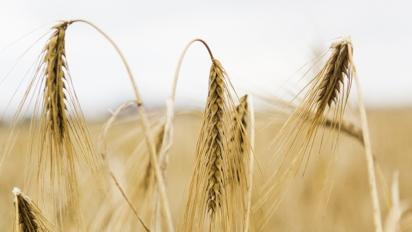поля урожай зерно удобрения