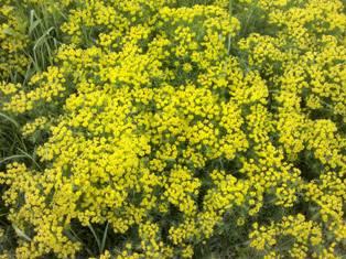 жёлтый газон из травы мини
