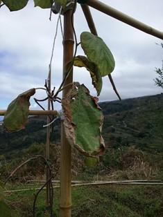 зелёные листья киви 3 мин