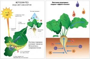 Оптимизация питания растений