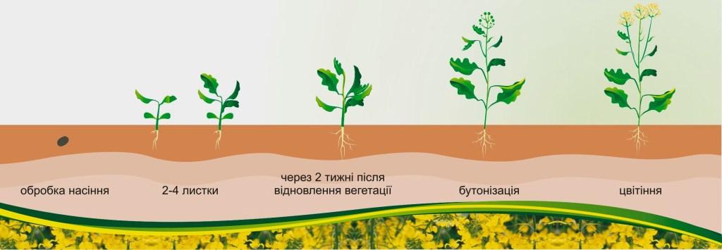 Рапс: технология возделывания, урожайность, удобрение