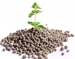 фосфорные калийные удобрения для зерновых